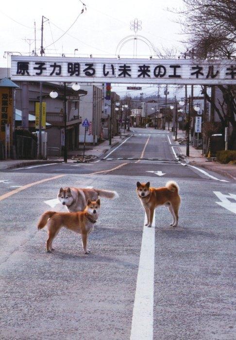 福島第一原発くのゴーストタウン